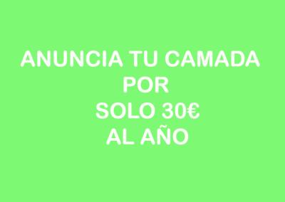 camadas_1