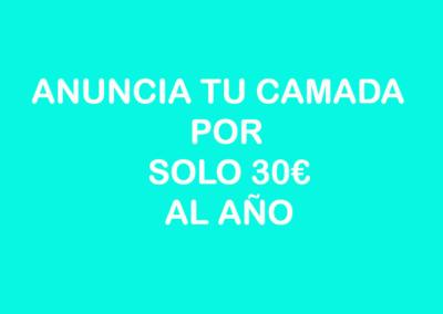 camadas_4